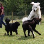 Hunde Freilauf