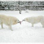 Schneespiele2